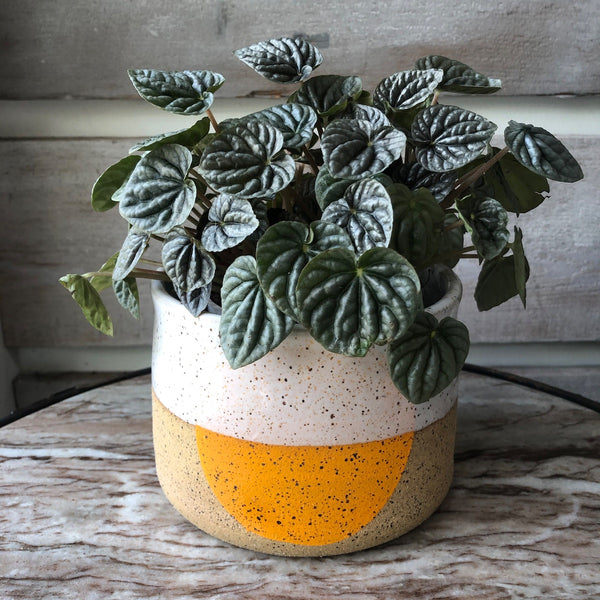 Doulbe M handmade pot with tangerine dot.
