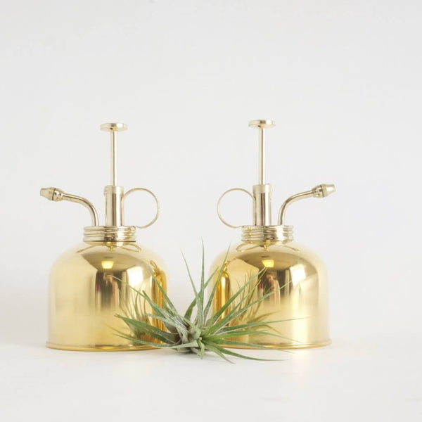Cute brass plant mister with air plant in fore ground.