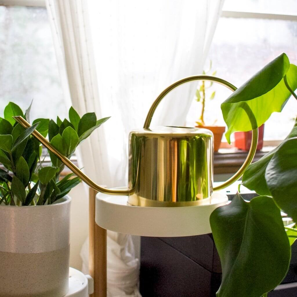 One-Liter brass watering can in a cute plant-filled apartment.