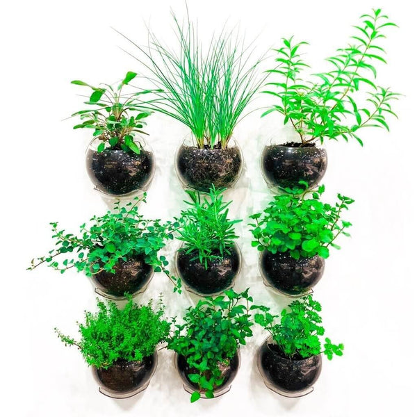 Nine clear Urban wall hanging planters with plants.
