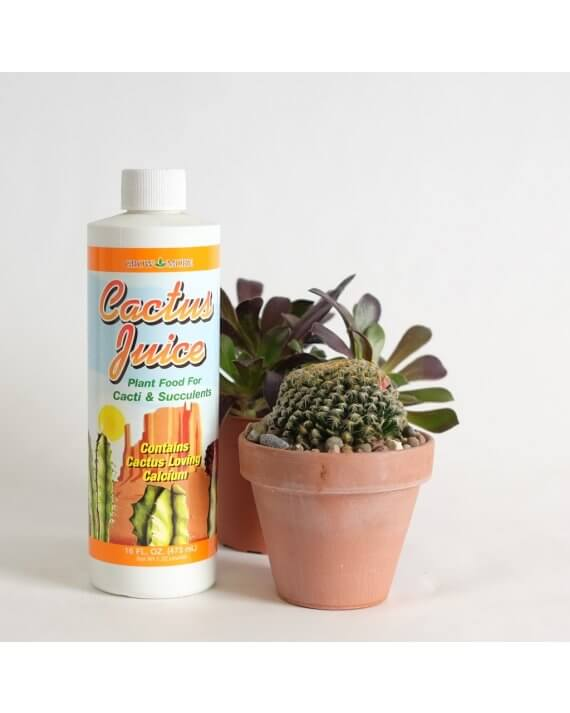 Cactus juice plant food bottle with a succulent.