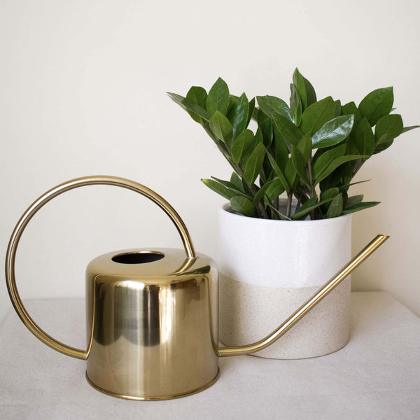 Brass watering can next to a zz plant.