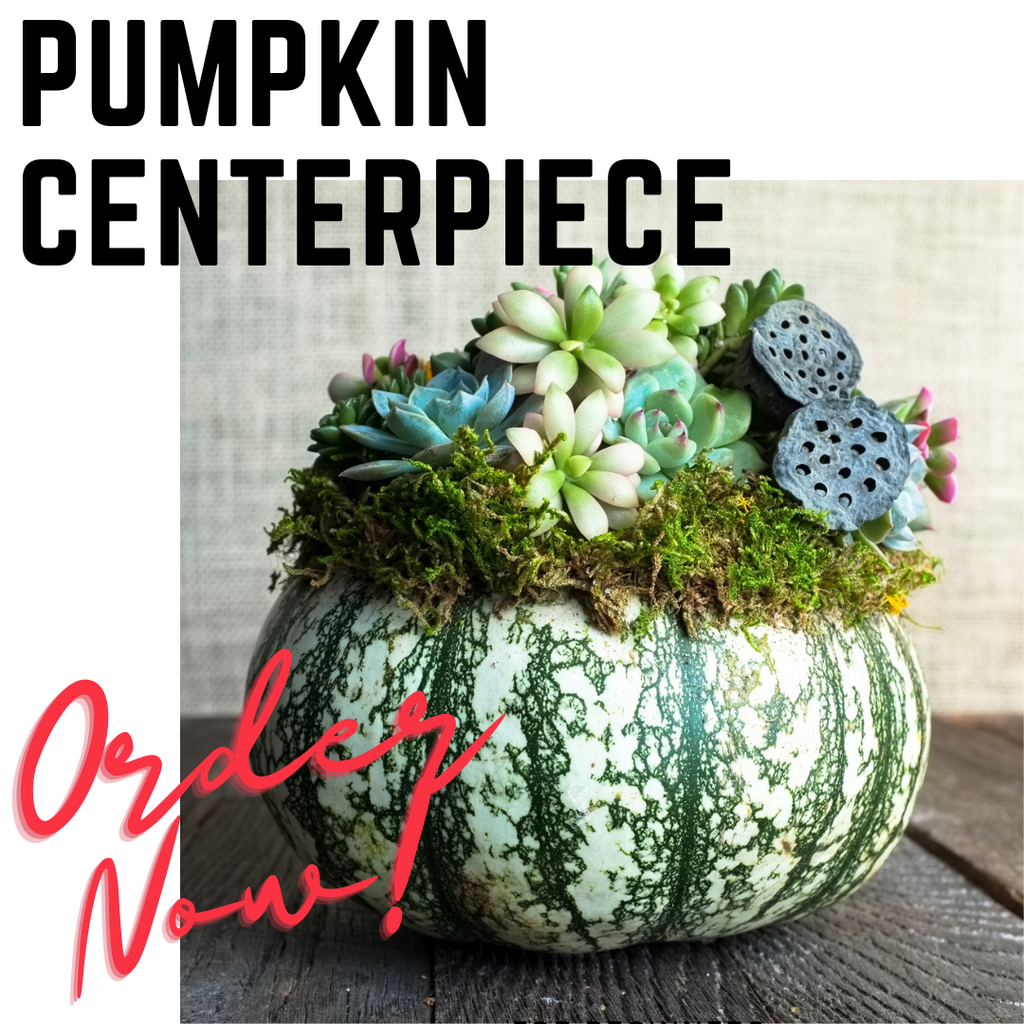 Pumpkin centerpiece covered in succulents