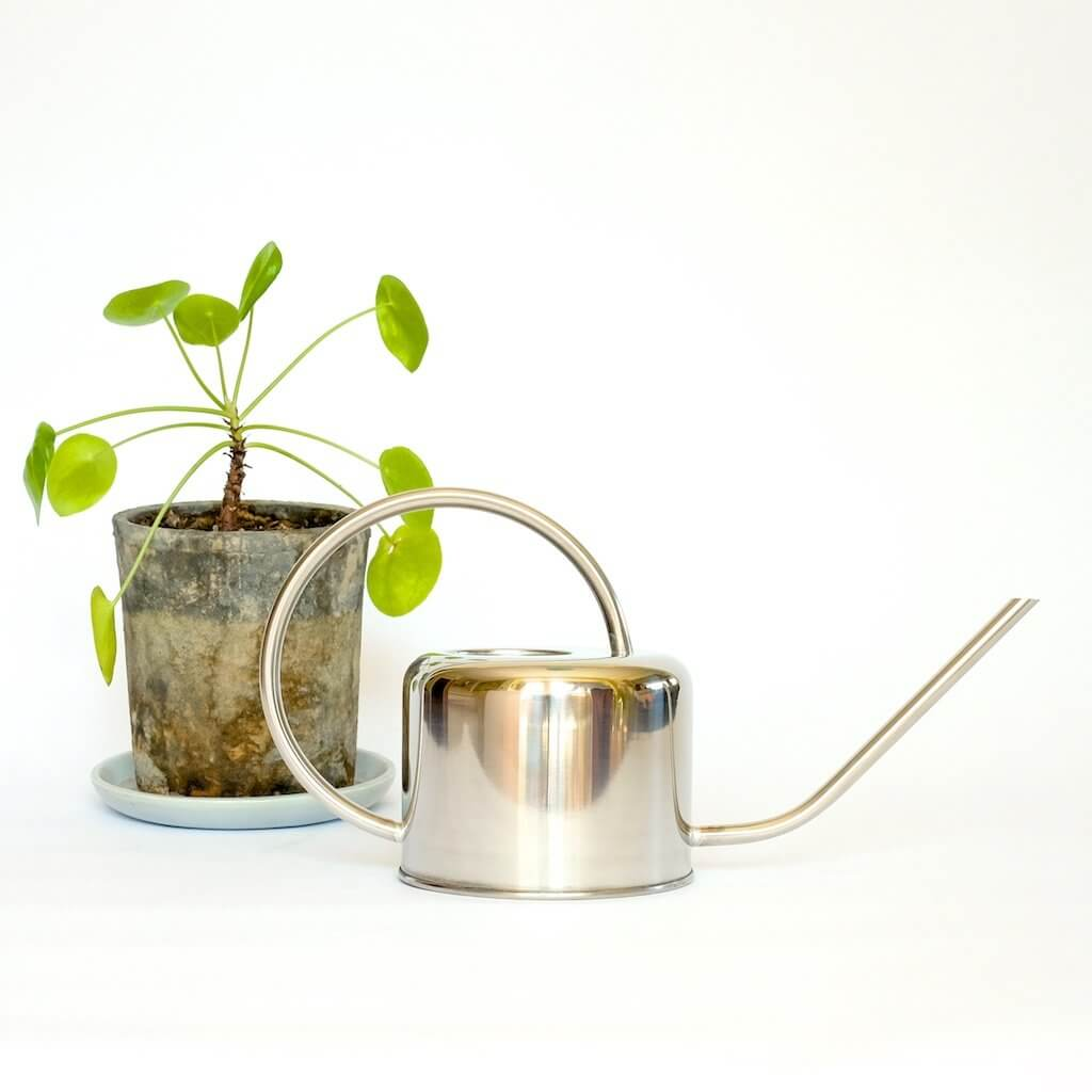 Stainless steel 1 liter watering can in front of piles peperomioides in a rust container.