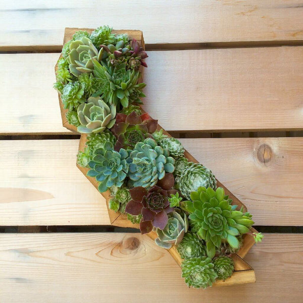 Succulent filled wall planter shaped as the state of California.