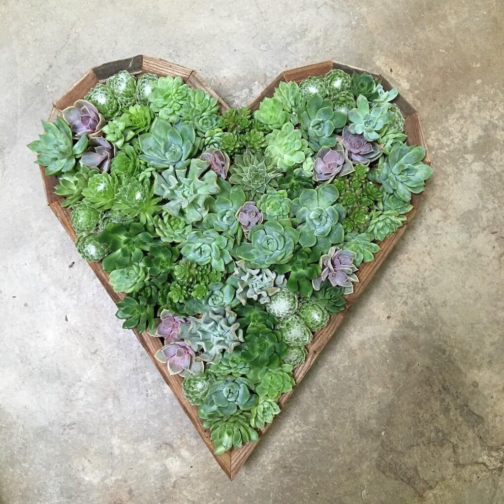 Succulent filled wood edged Heart-shaped hanging planter.