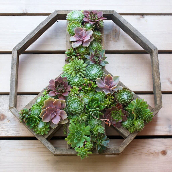 Succulent filled wooden Peace sign.