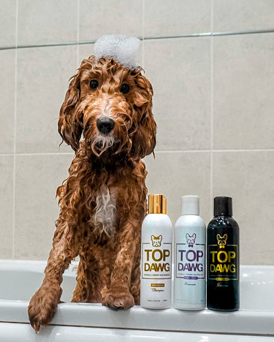 How To Bath Your Puppy: 6 Tips To Get Your Puppy To Love Bath Time