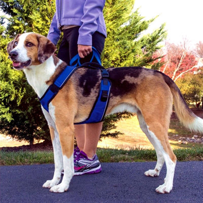 Big Dog Easy Sport Harness