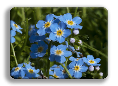 Forget-Me-Not Cutting Board