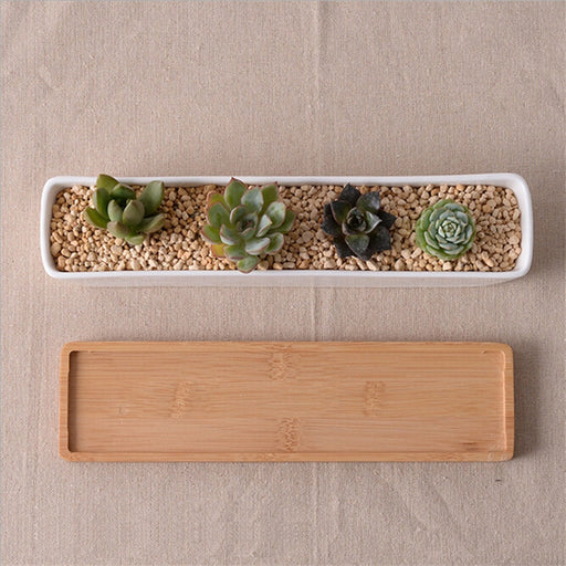 Modern White Ceramic Succulents Plants Planter With BambooTray - Ocloq Shop
