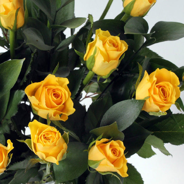 20 Yellow Roses with Greenery
