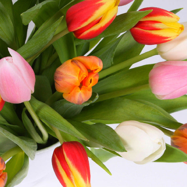 25 Mixed Tulips
