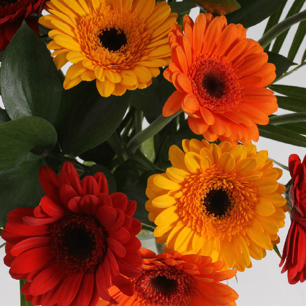 15 Gerbera with Greenery (Warm mix)