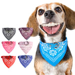 Pup Bandana + Leather Collar Combo!