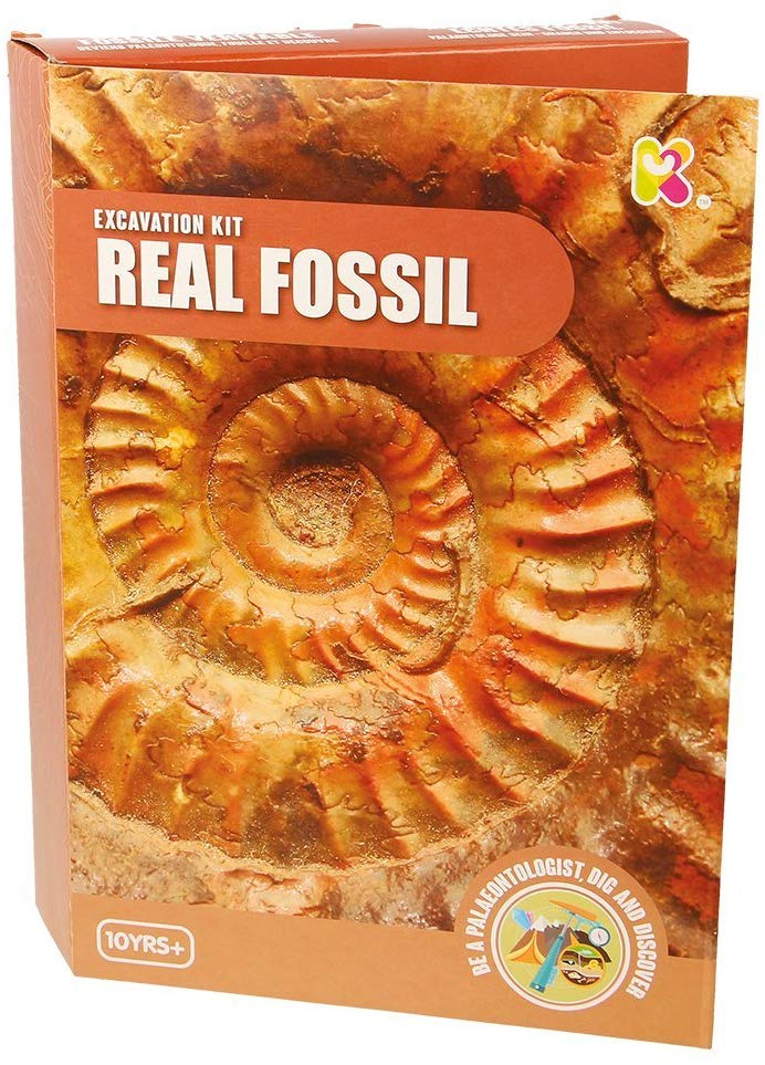 Keycraft  Real Fossil Excavation Discovery Kit The Bubble Room Toy Store Dublin