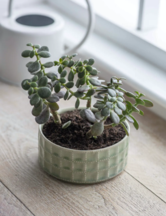 sage green ceramic large succulent planter