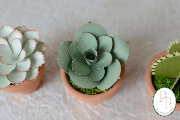Set of 3, small handmade paper succulents and cactus planted in preserved moss in tiny terracotta pots against a white background.