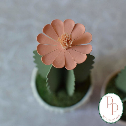 Close up of blooming paper succulent with long, rounded coral petals.