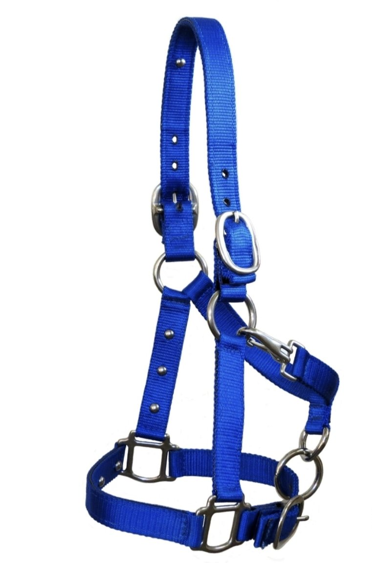 The Magic Cow Halter with Communication Buttons - Nylon