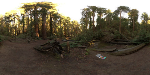HDR LightMap: Muir Woods Forest (Day)
