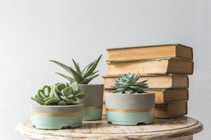Blue or Mint Gold Striped Planters-Set of 3