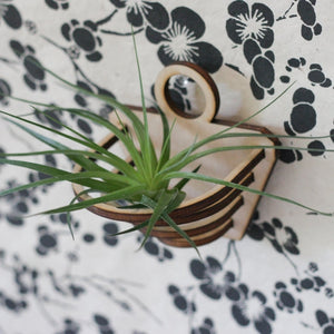 Bars Air Plant Wall Holder + Airplant
