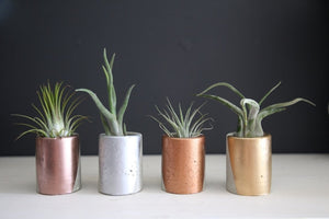 Mini Concrete Handpainted Planters - Set of 4