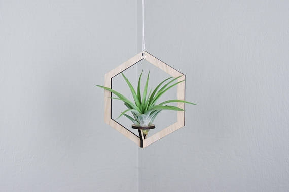 Suspended Shapes Air Planter + Airplant