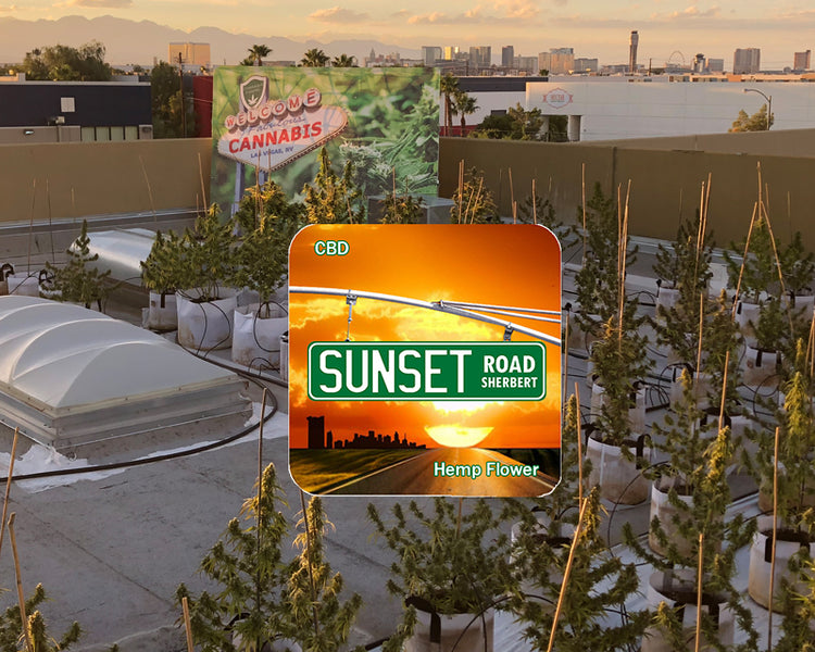 SUNSET ROAD SHERBERT NEW CBD FLOWER AT CBD HEMP DIRECT