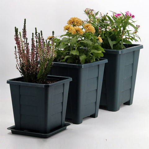 Square Plastic Root Pot