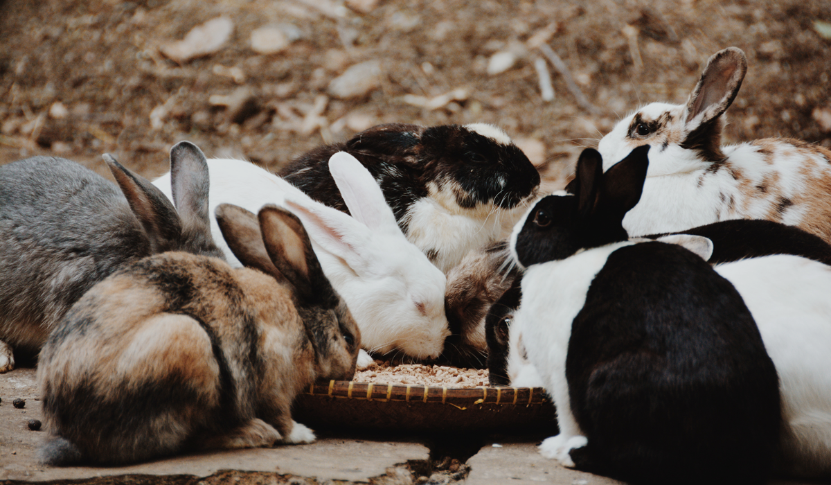 cruelty-free beauty group of bunnies