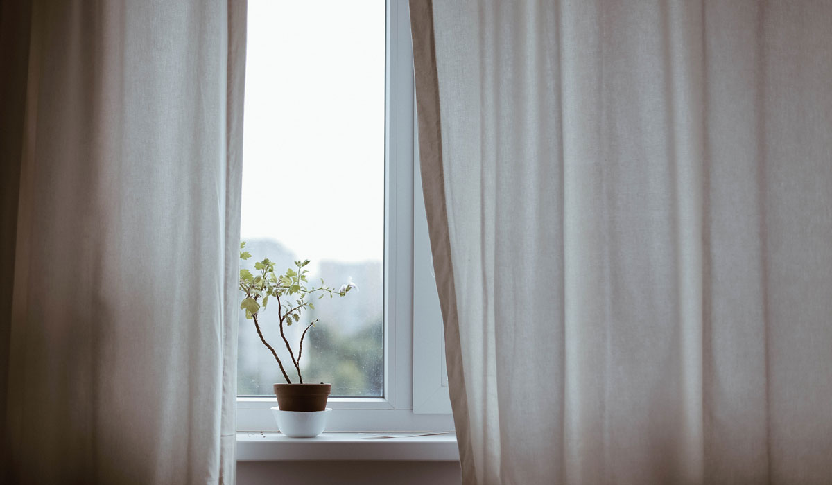 beauty sleep hack plant on window