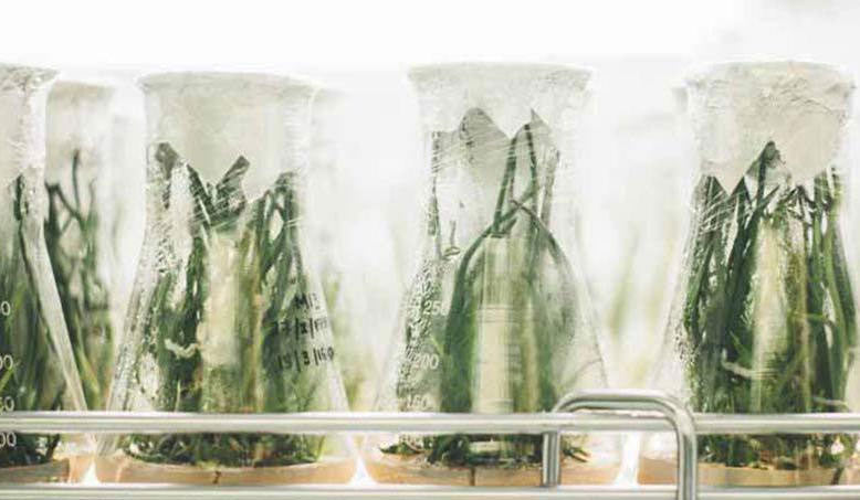 skin detox plants inside chemical jar