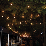 Festoon Lights - Cable Belt - 10M - 100cm spacing
