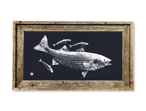 Framed white on dark blue striped bass and mackerel  26 x 16 framed print