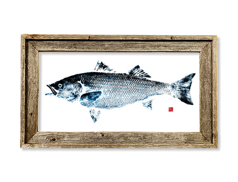 Framed blue and black Striped Bass  26 x 16 framed print