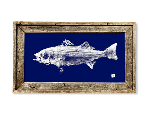 Framed white on blue Striped Bass  26 x 16 framed print