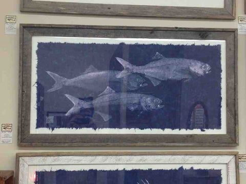 Three bluefish