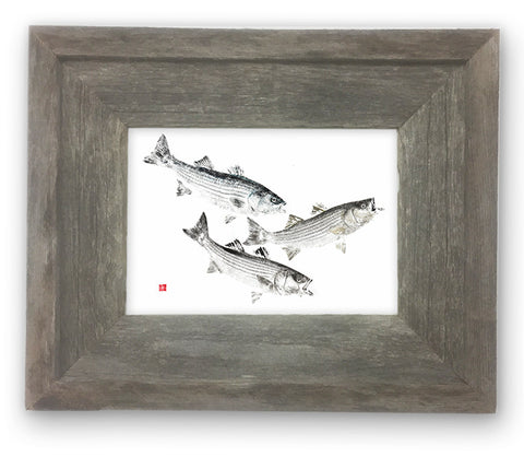 Small Framed  Three Striped Bass