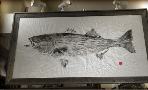 Original 50 pound striped bass- print 2