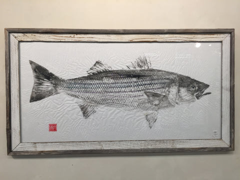 Original Striped Bass