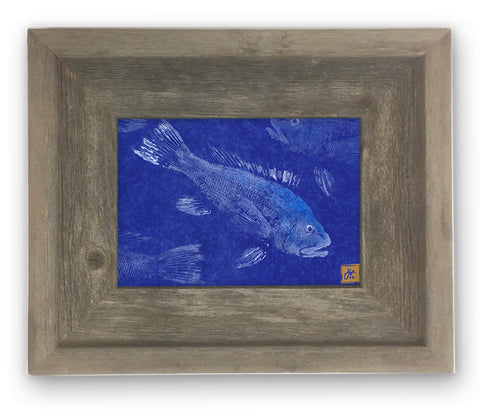 Small Framed Black Sea Bass on Blue Background
