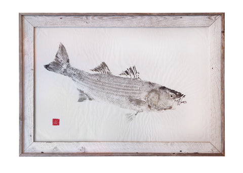 Striped Bass Original Print in White Wash Frame