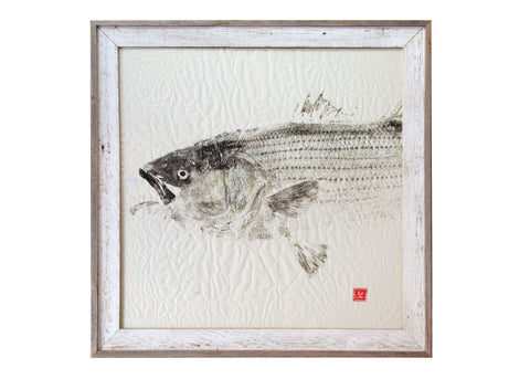 Striped Bass 50 lb fish - Original Print - White Washed Frame