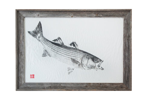 Striped Bass Original Print - Framed