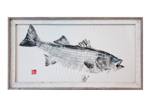 Striped Bass Original with Blue Detail