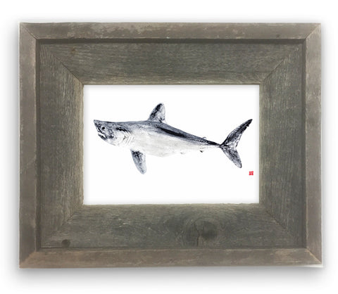 Small Framed Porbeagle Shark