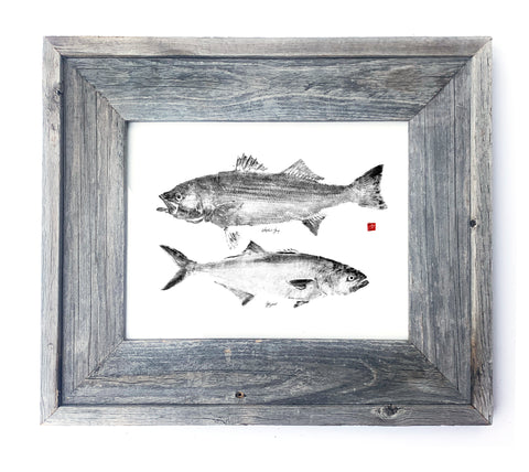 16 x 13 Framed Striper and Bluefish
