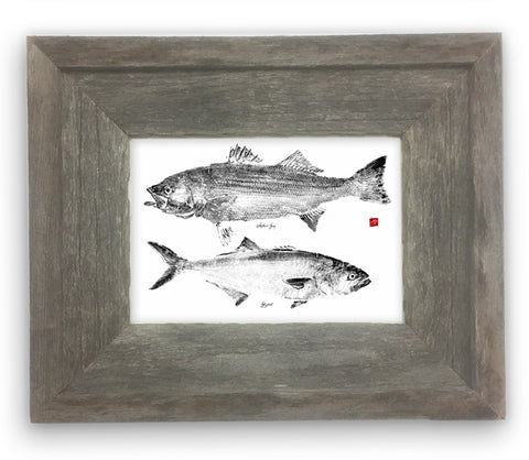 Small Framed Striped Bass and Bluefish